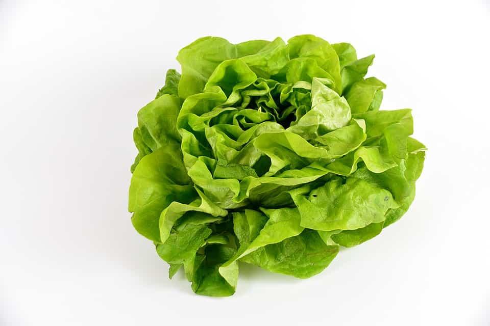 Blattsalat zubereiten